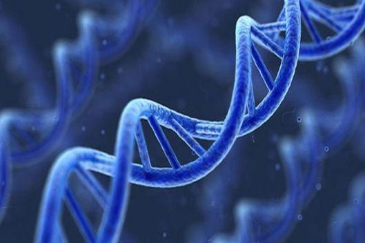 genes_11